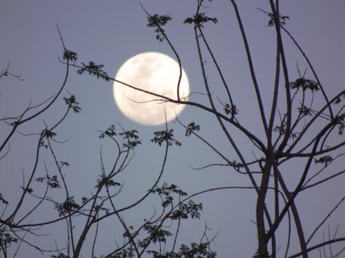 moontreesblog